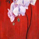 Multi Red Orchid